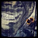 butterfly balmy alley