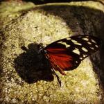 Butterfly in love